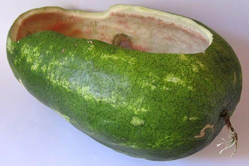 Radio Controlled Watermelon